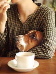1a hound