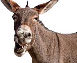 1aa donkey.